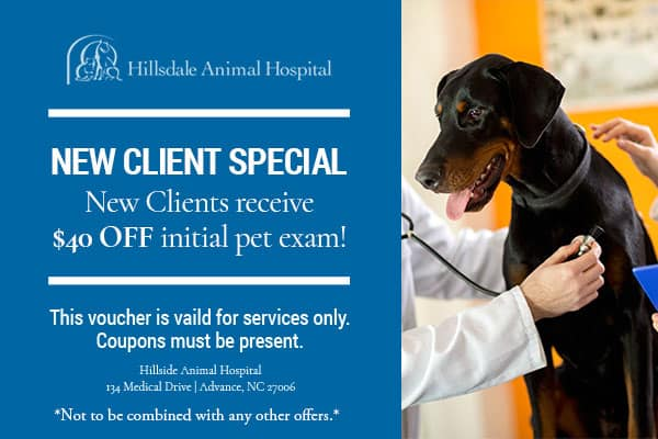 New Client Special coupon - dog